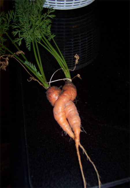 carrot.png